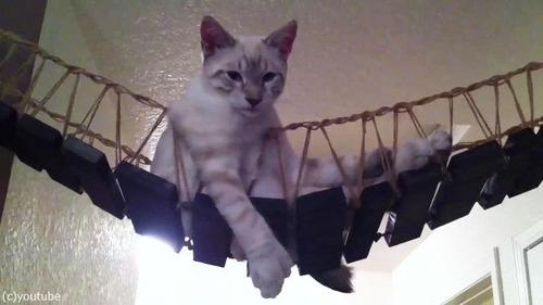 猫と吊り橋10