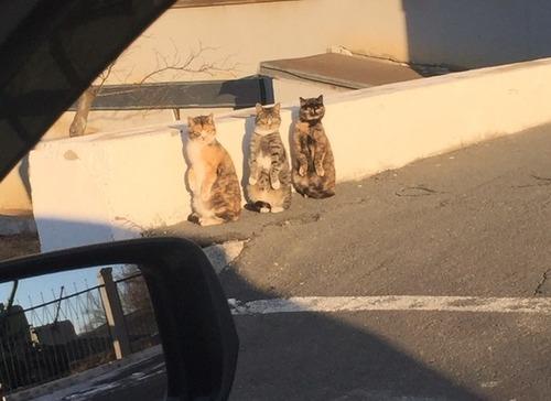 道ばたに猫が3匹02