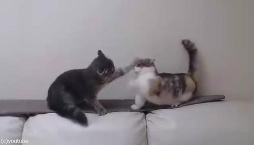 猫のバトル04