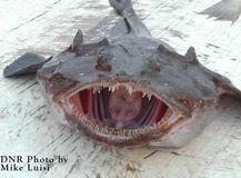 4.チョウチンアンコウ(Anglerfish)