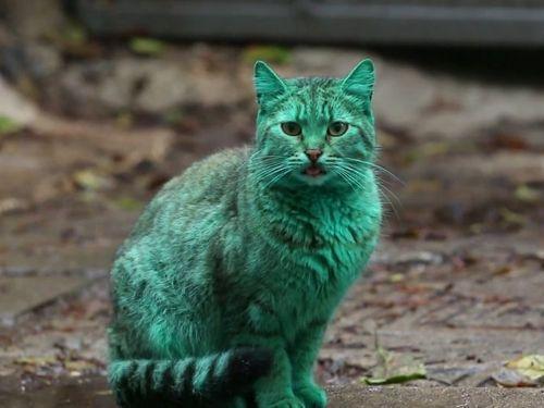 エメラルドグリーン色の猫08