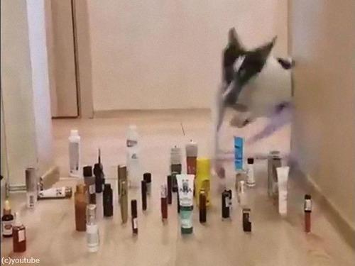 猫と犬の障害物回避03