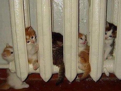 ぬくぬくする猫たち00