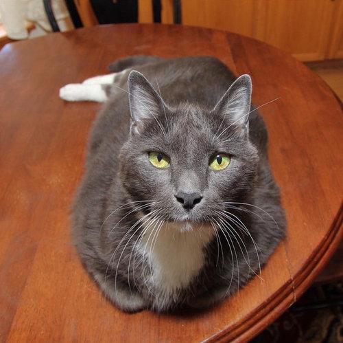 ダイエット猫07