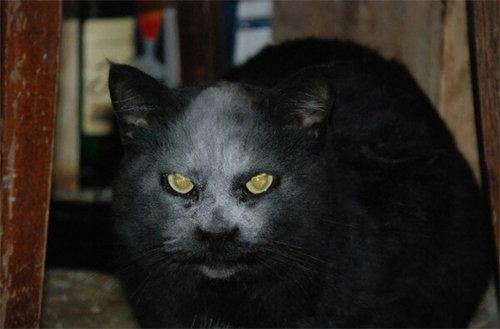 小麦粉をかぶった黒猫03