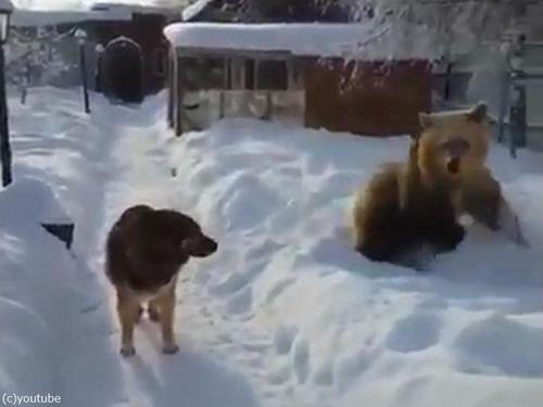 クマ「がおークマだぞぉー!」 犬「知ったこっちゃねー」02