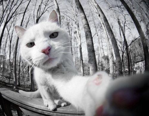 猫の自撮り07