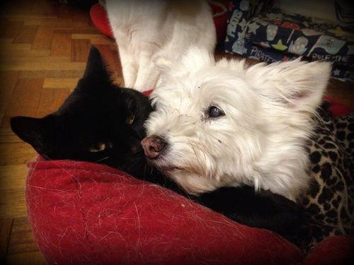 誰にも心を開かなかった犬が、猫と親友に00