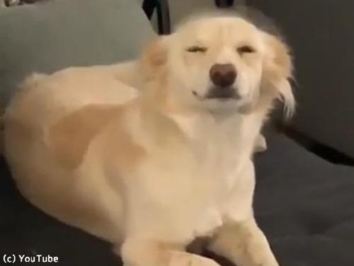 飼い主さんの帰宅を笑顔で出迎える犬00