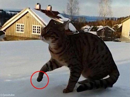 猫の足首の柔らかさ00