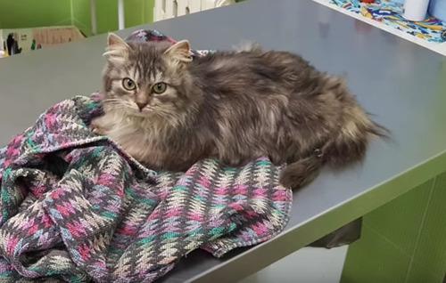 ロシアで凍り付いた猫06