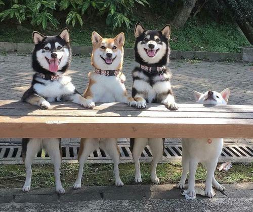 犬「努力は必ず報われるとは限らないとき…」01