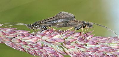 虫の交尾07