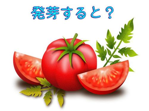トマトの発芽00
