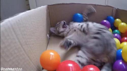 カラーボールと猫01
