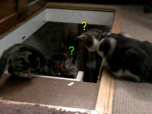 コントみたいな猫2匹