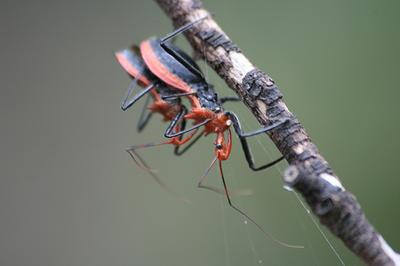 虫の交尾02