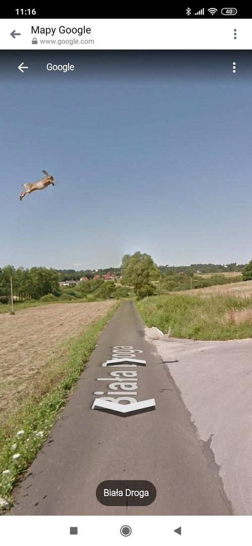 Googleストリートマップに写っていたウサギ01