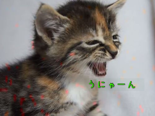 子猫たちの鳴き声00