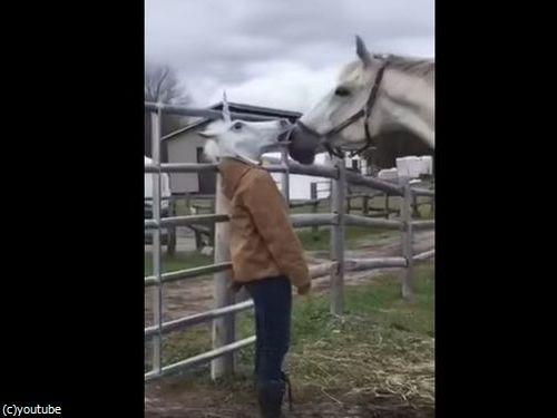 馬のマスクをとったときの馬のリアクション01