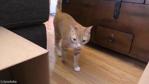 猫2匹にダンボール迷路をプレゼント03