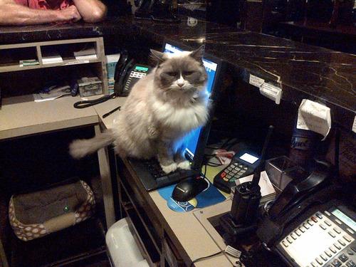 ホテルに勤続7年の猫が引退01