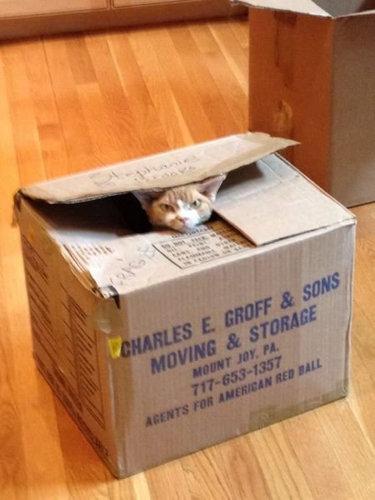 11箱や入れ物に収まる動物たち