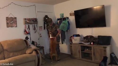軍から帰ってきたご主人を迎えるペットの反応…犬と猫で全然違う01