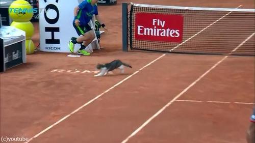 テニスの試合に猫が乱入02