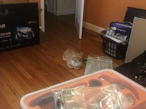 猫が見つめてくる01