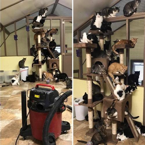 猫の施設で掃除機01