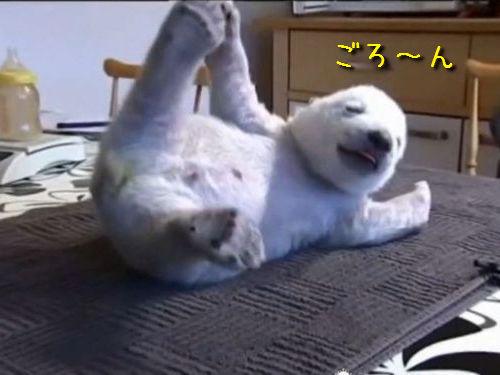 シロクマの赤ちゃん「シク」