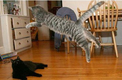 猫ジャンプ05