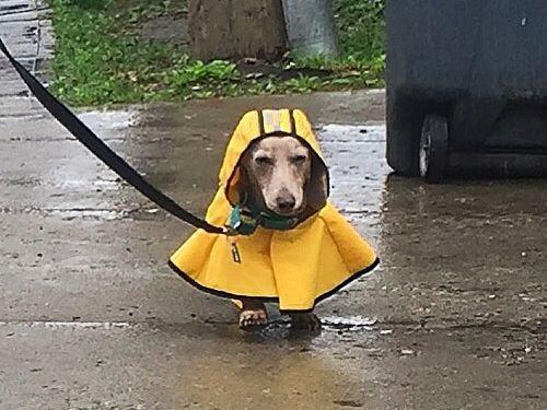 犬のレインコート02