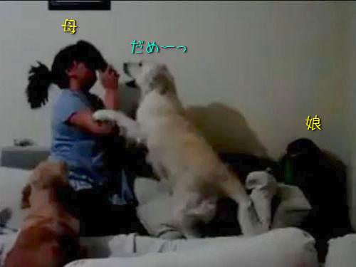 娘を叱る母親を犬が止める00