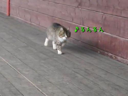 ごきげんな猫00