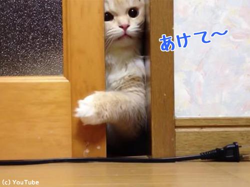 ドアを開けて欲しい猫00