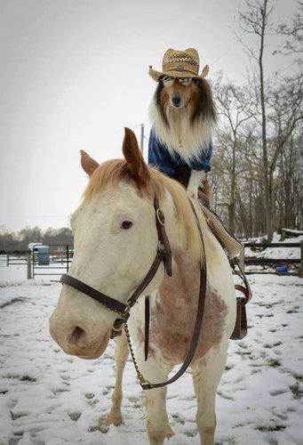 馬に騎乗する犬03