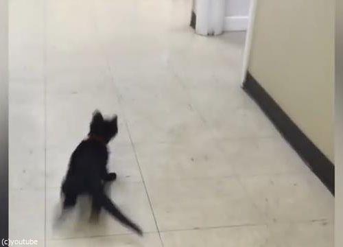 ピンポン猫03