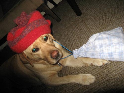 6歳の娘が犬をモデルにして写真02