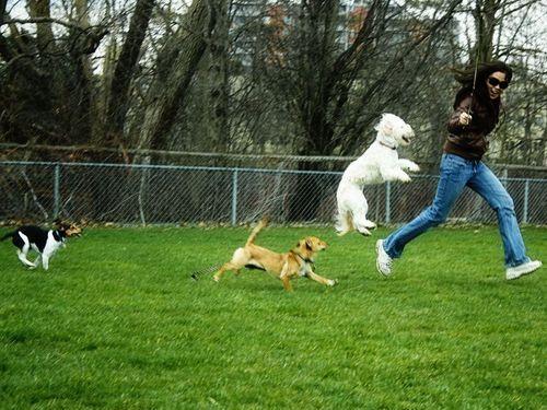 公園で遊んだ犬02