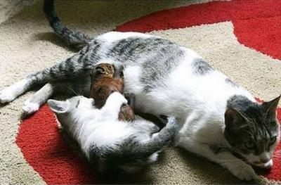 リスと猫03