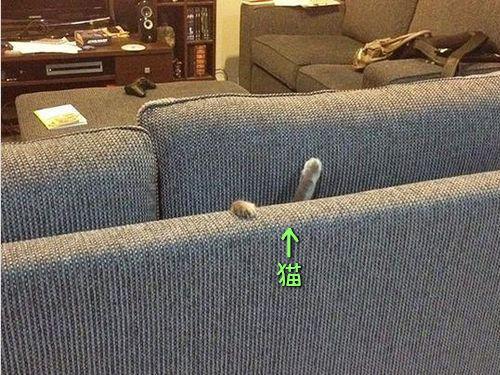 犬や猫の家具の使い方00