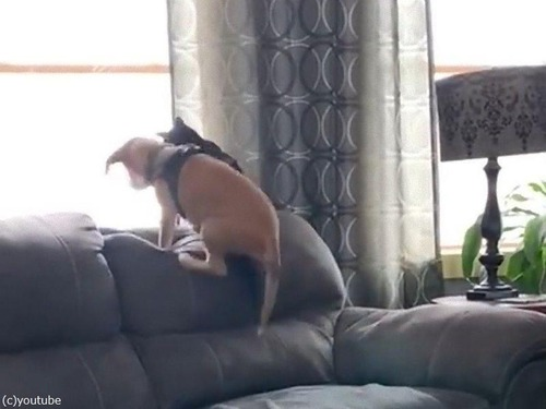 肩を組む犬と猫02