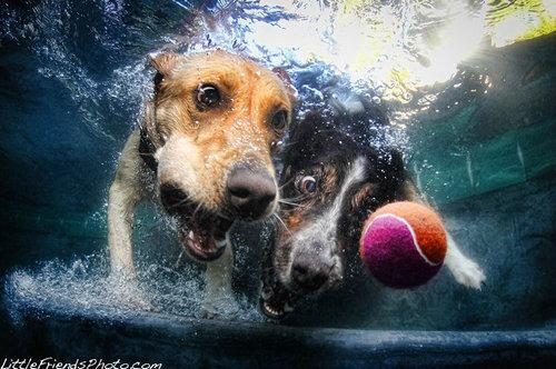 水中の犬01