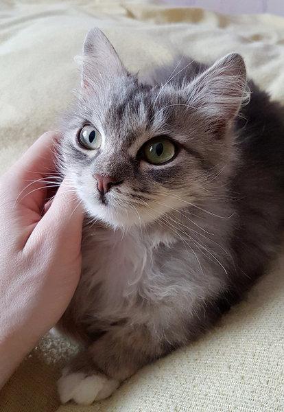 ロシアで凍り付いた猫08