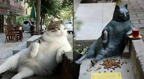 イスタンブールの猫07