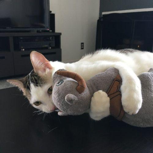 「生後間もない子猫を拾ったの」10