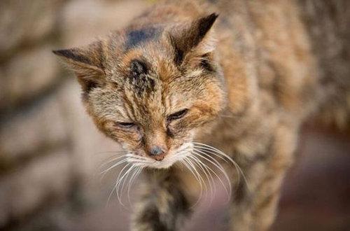 最高齢の猫09