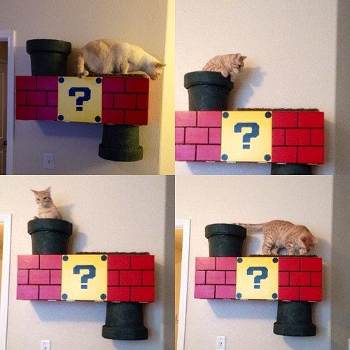 スーパーマリオな猫の遊び場09